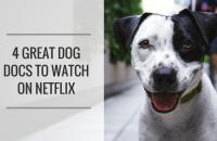 4 Great Dog Documentaries to Watch on Netflix
