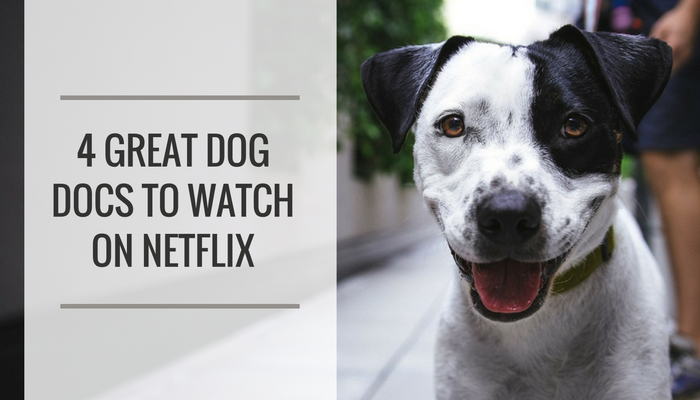 4 Dog Documentaries to Watch on Netflix