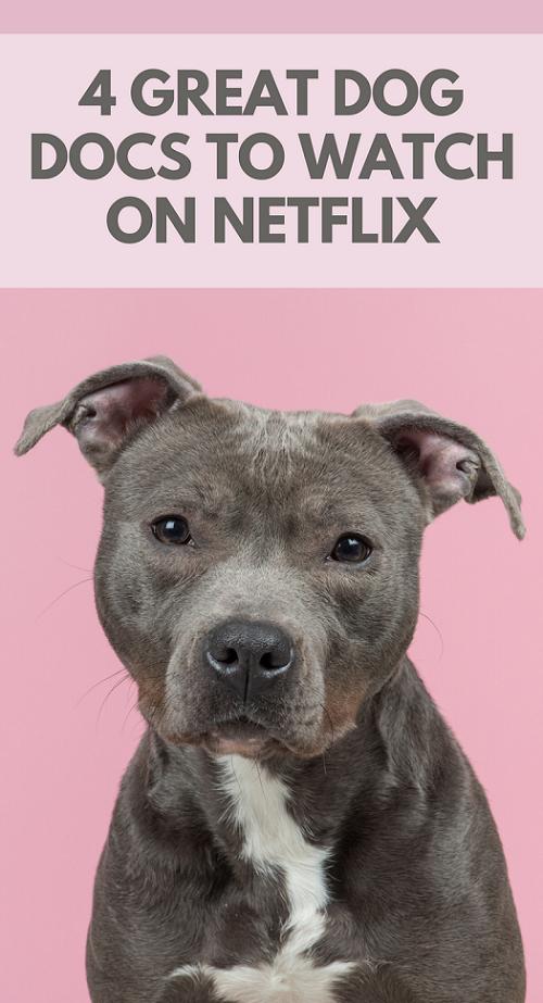 Great Dog Documentaries on Netflix