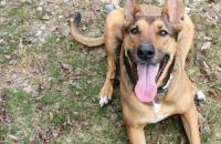 Puppy Leaks: Pet Blogger Challenge 2017