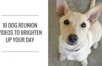 10 Dog Reunion Videos to Brighten Up Your Day