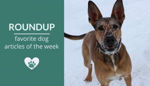 Roundup 90: Favorite Dog Articles, Deals & Videos of the Week