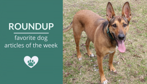 Roundup 91: Favorite Dog Articles, Deals & Videos of the Week