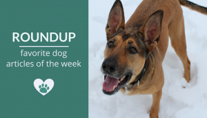 Roundup 92: Favorite Dog Articles, Videos & Deals of the Week