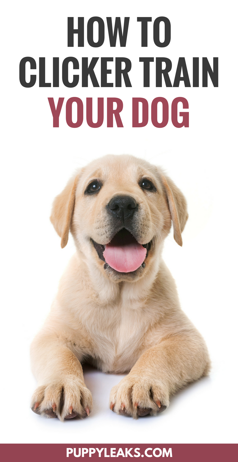 How to clicker train your dog. How to get started with clicker training.