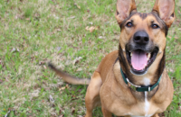 How I Finally Understood the Importance of Patience in Dog Training