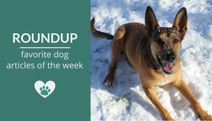 Roundup 93: Favorite Dog Articles, Deals & Videos of the Week