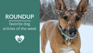 Roundup 94: Favorite Dog Articles, Videos & Deals of the Week