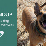 Roundup 95: Favorite Dog Articles, Videos & Deals of the Week