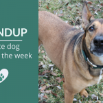 Roundup 96: Favorite Dog Articles, Videos & Deals of the Week