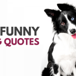 25 Cute & Funny Dog Quotes