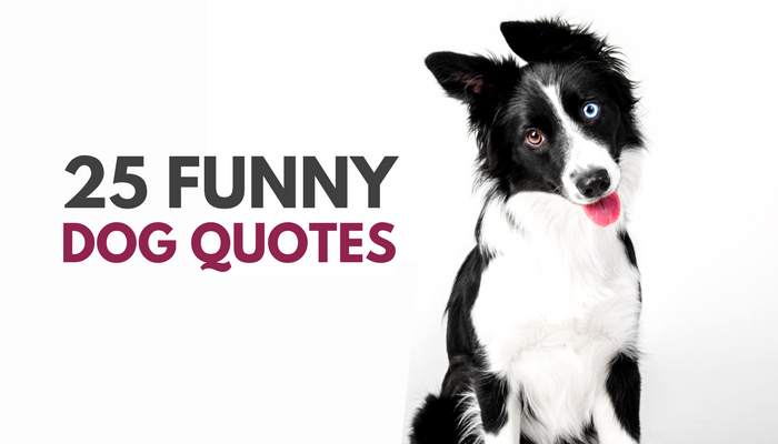 25 Funny Dog Quotes