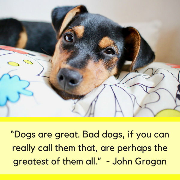 25 Funny Quotes About Dogs