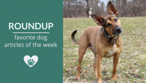Roundup 99: Favorite Dog Articles, Videos & Deals of the Week