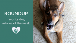 Roundup 103: Favorite Dog Articles & Videos of the Week
