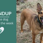 Roundup 104: Favorite Dog Articles & Videos of the Week