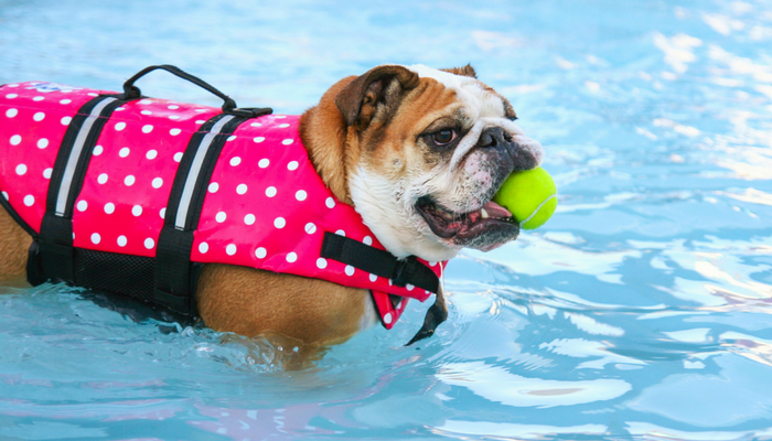 10 Summer Safety Tips for Dogs