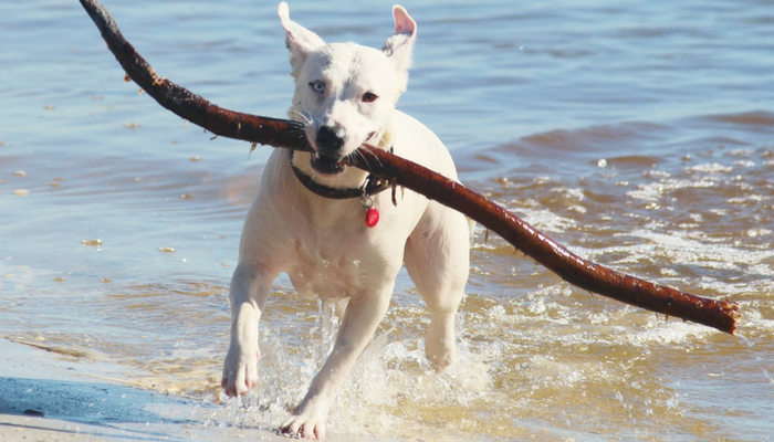 10 Water Safety Tips for Dogs