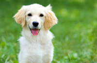 15 Things No One Tells You Before Getting a Dog