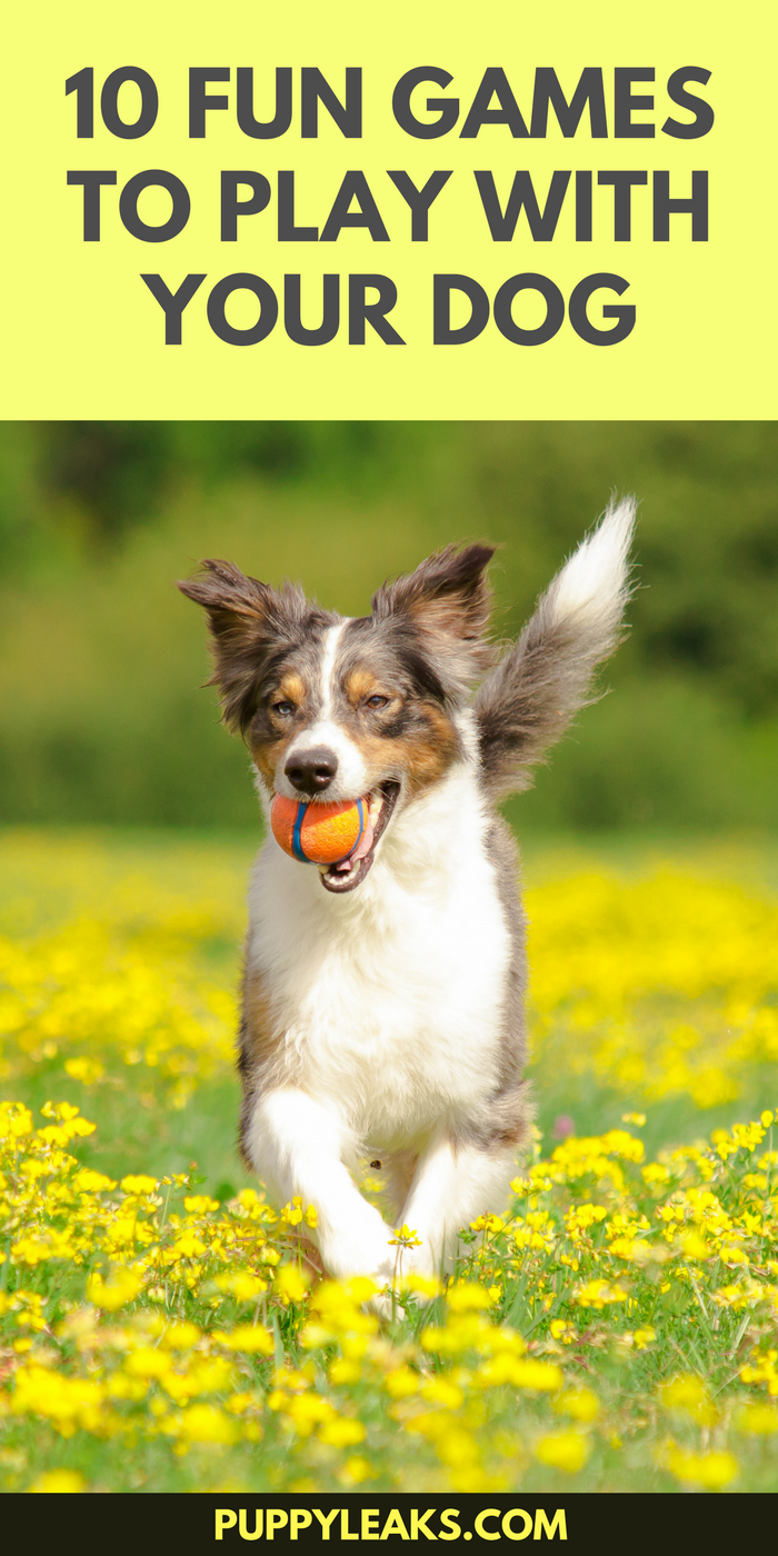 10 Fun Games to Play With Your Dog