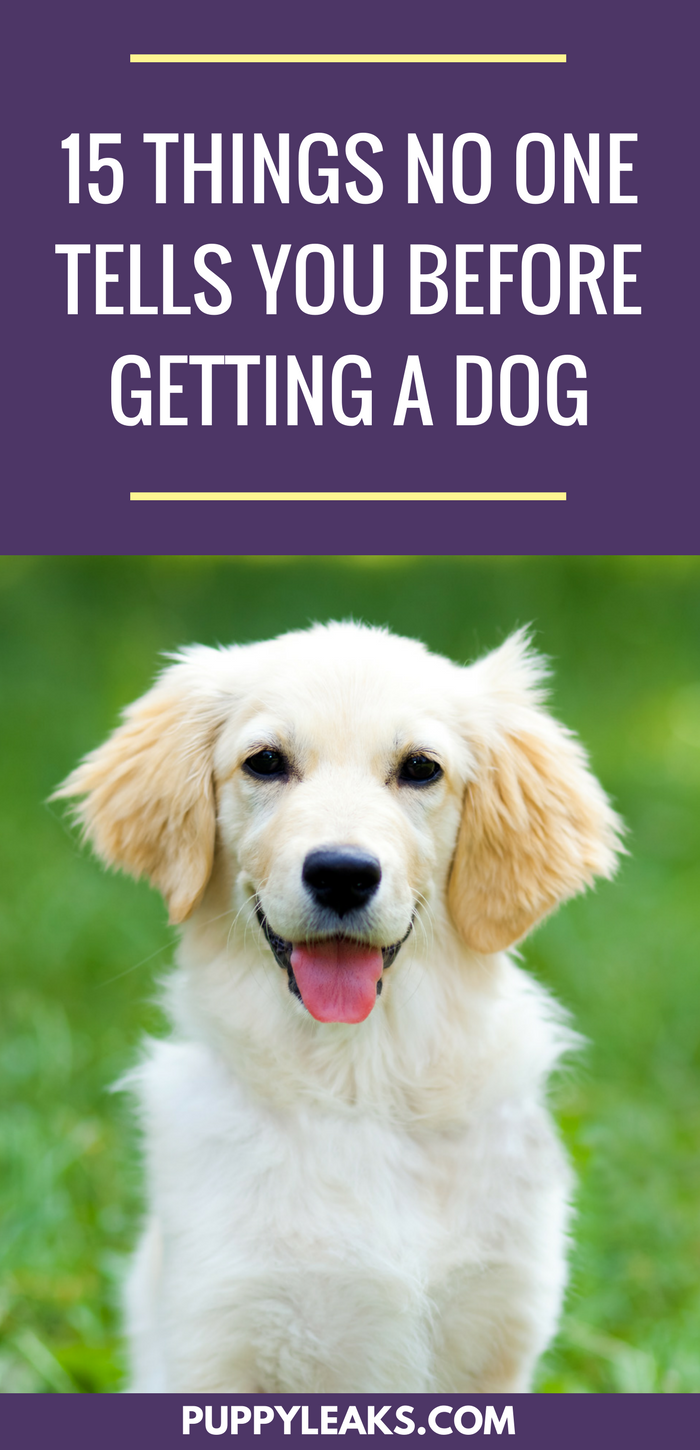 15 Things No One Tells You About Getting a Dog