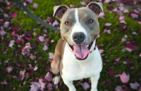 New Delaware Law Prohibits Breed Specific Legislation