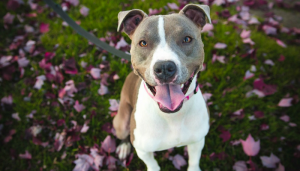 New Delaware Law Prohibits Breed Specific Legislation