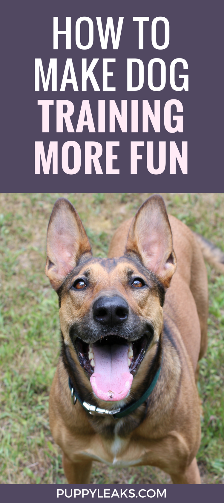 How to make dog training more fun & interesting. How switching up your dog training rewards will keep your dog focused and entertained.