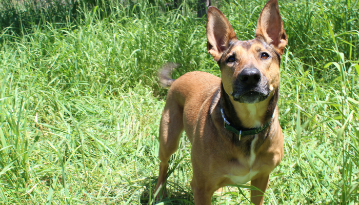 Keep Dog Training Interesting By Switching Up The Rewards