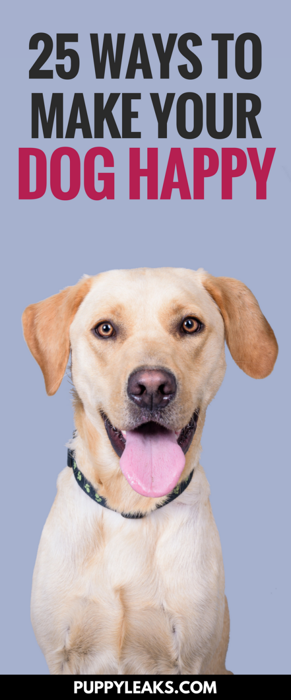 25 Ways to Make Your Dog Happy. Fun activities & games for dogs.