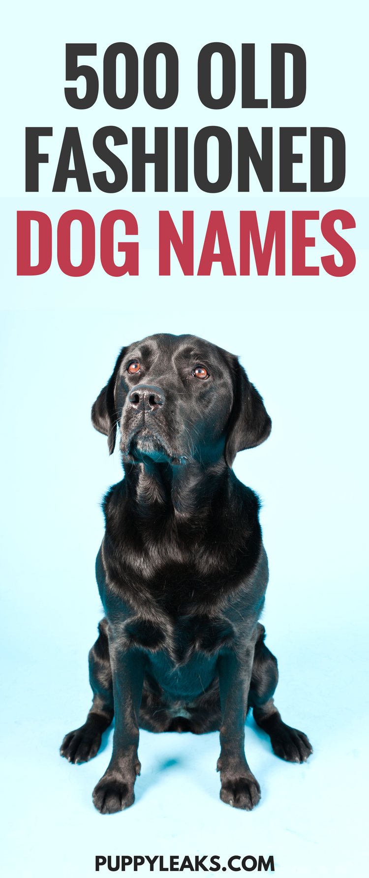 Old fashioned boy dog names 65